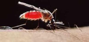 mosquito-Portal-Amigo-do-Idoso