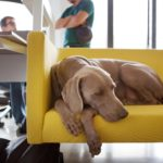 Cachorro-na-Empresa-Portal-Amigo-do-Idoso