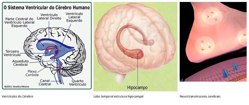 modificacao-no-cerebro1