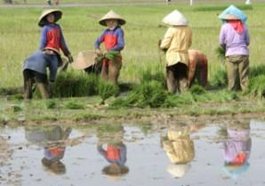 agricultura no sudeste asiatico